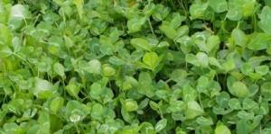 clover plots for Idaho wildlife
