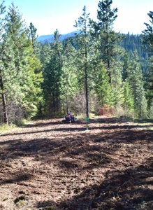 elk food plot in the rocky mountains