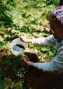 Picking blueberries with Grandma